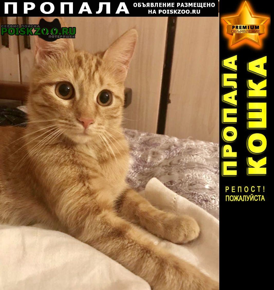 Пропала кошка рыжая щукино Москва