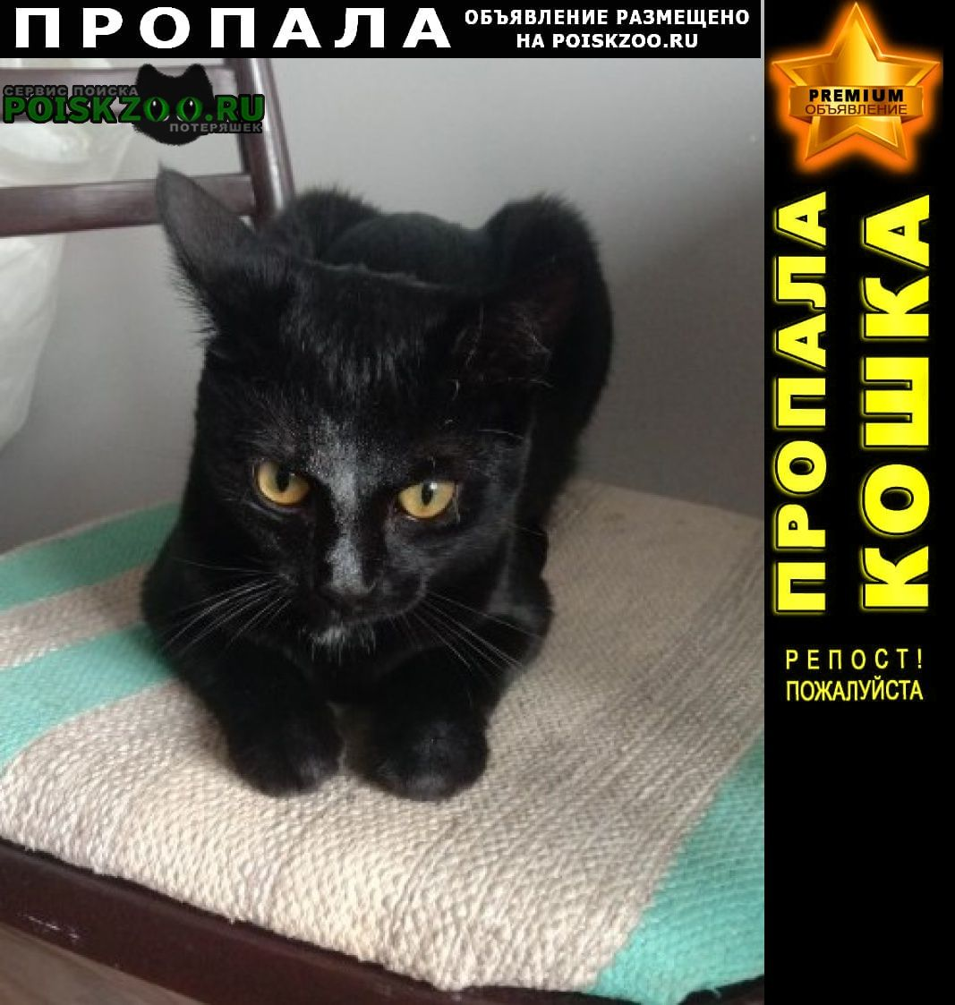 Пропал кот черный -марик Подольск