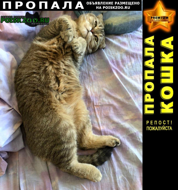 Пропала кошка шотландская вислоухая, девочка, Москва