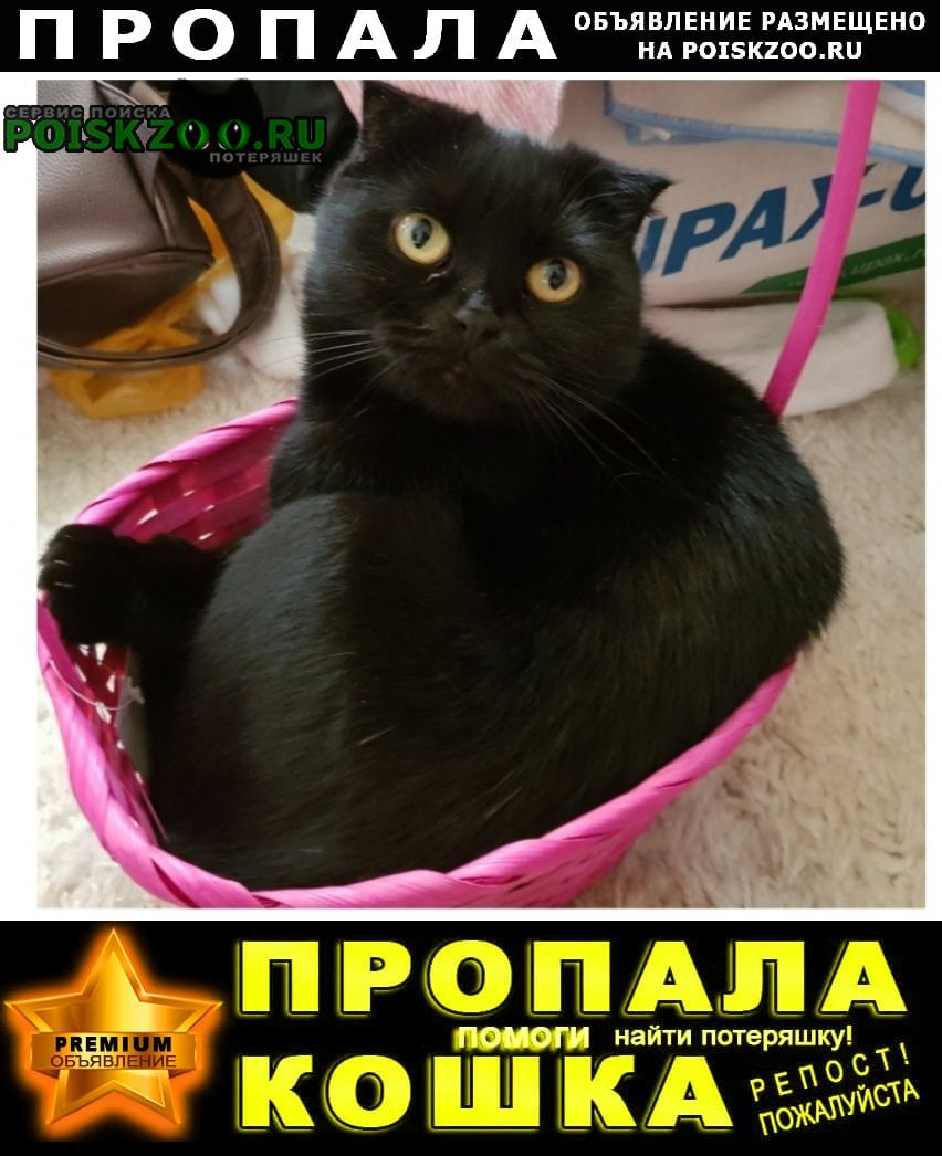Пропала кошка помогите Георгиевск