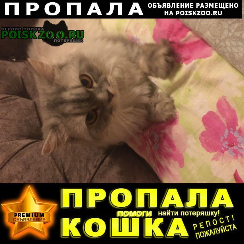 Пропала кошка Верхняя Пышма
