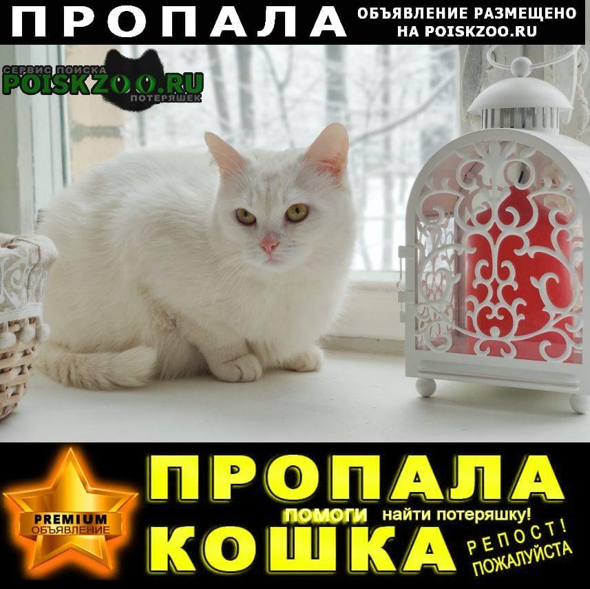 Пропала кошка белая пуся Павловский Посад