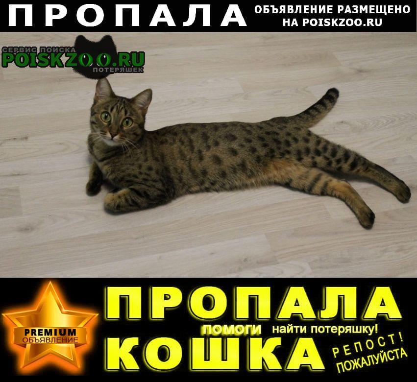 Пропала кошка помогите найти Татищево