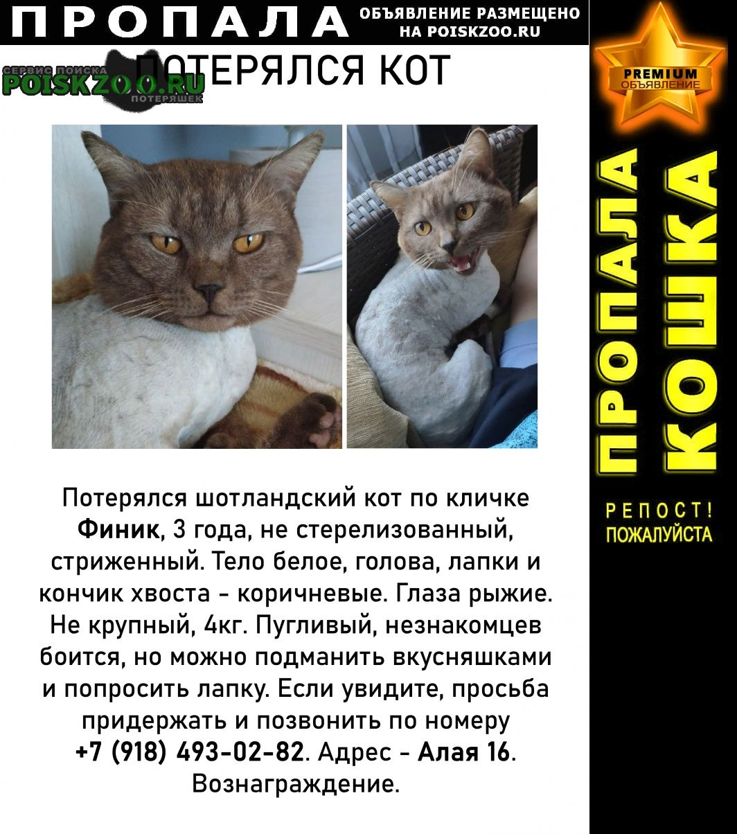 Пропал кот, вознаграждение Новороссийск