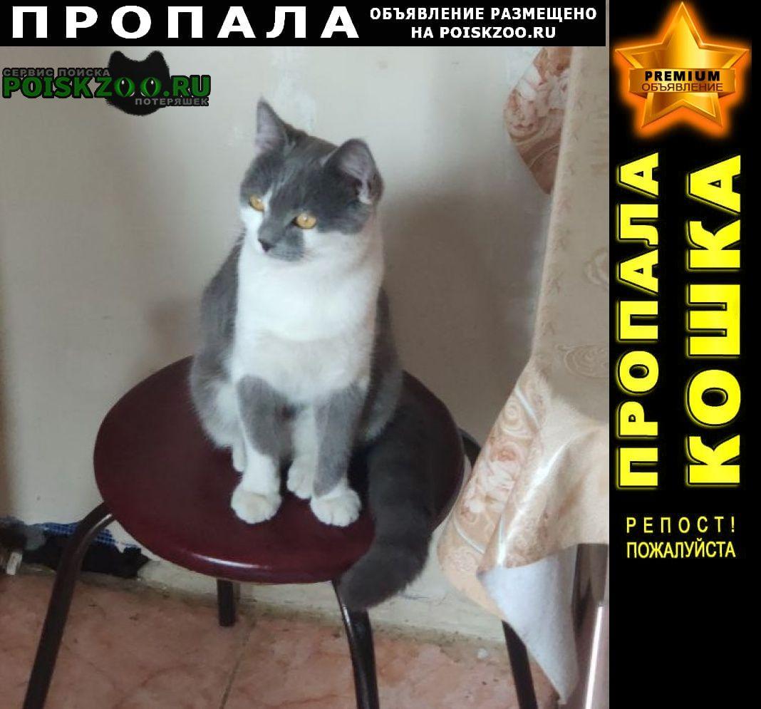 Пропал кот Таганрог