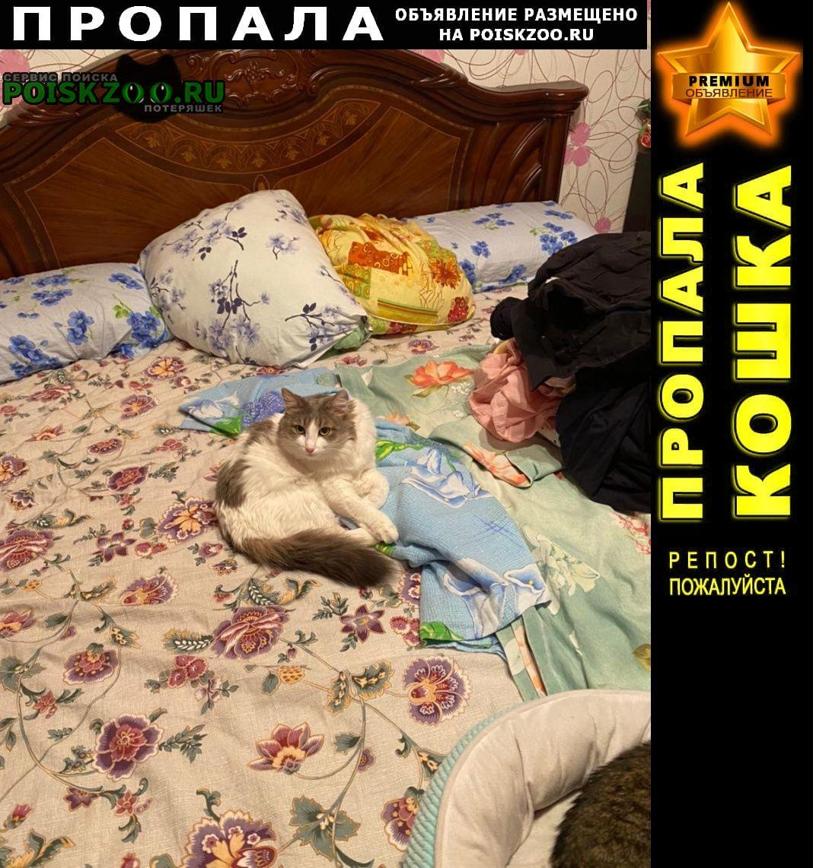 Пропала кошка домашняя кошечка Нижний Новгород