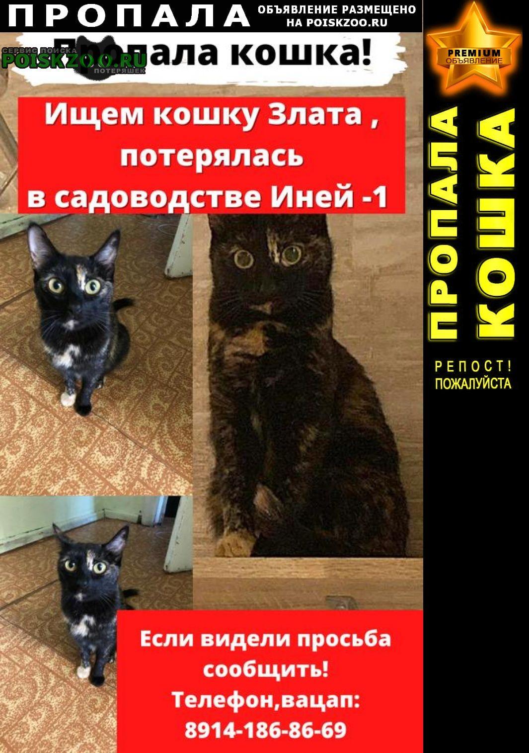 Пропала кошка в садоводстве иней1 г обь. Новосибирск
