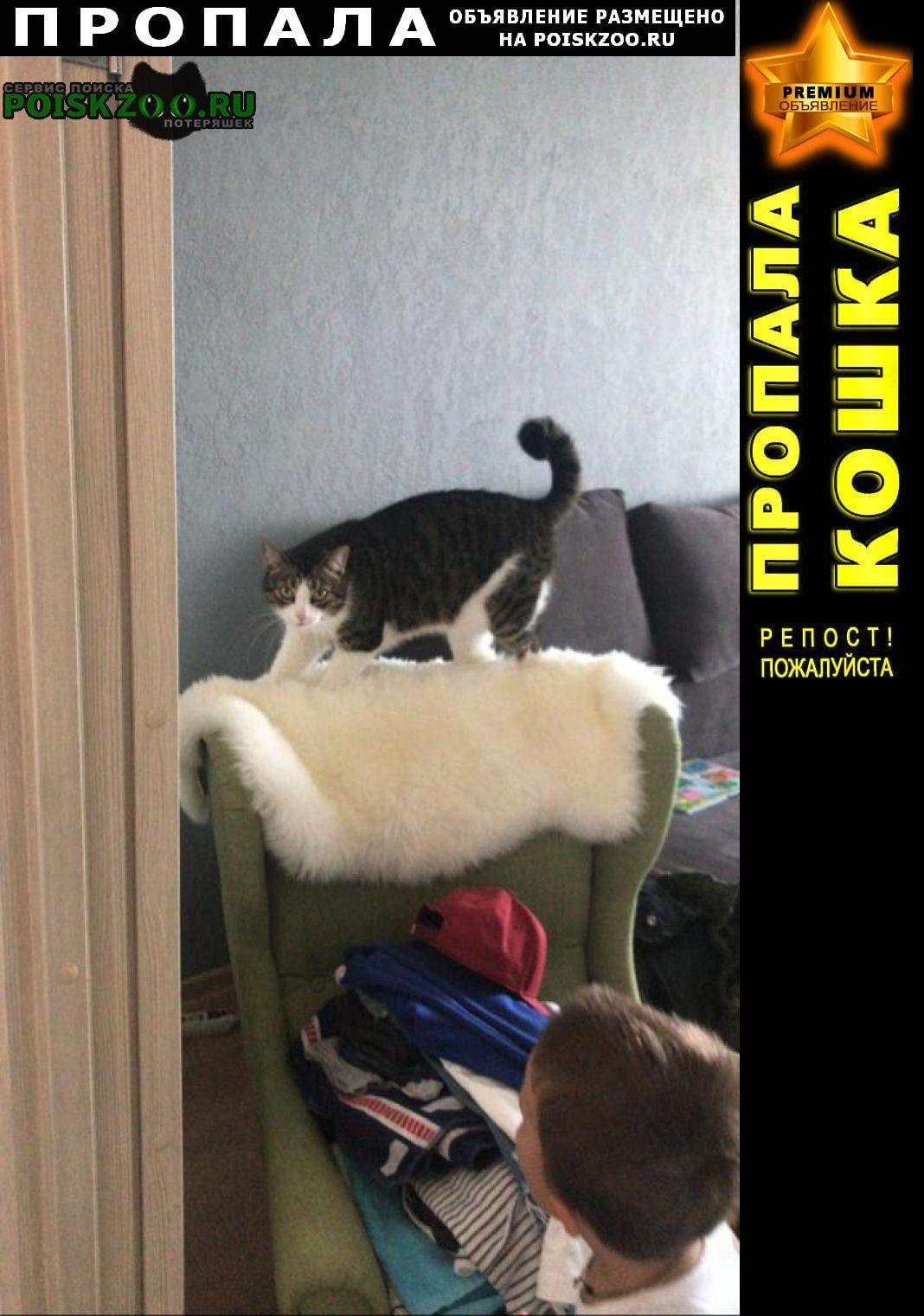 Пропал кот вася в голубом ошейнике Санкт-Петербург