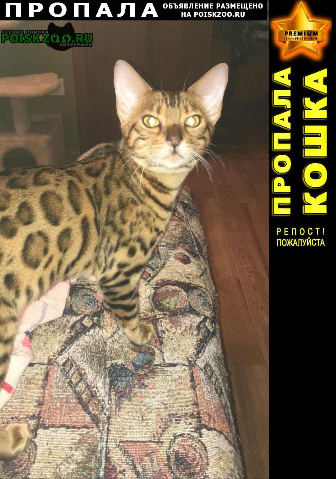 Пропала кошка бенгальская порода, возраст менее года Ростов-на-Дону