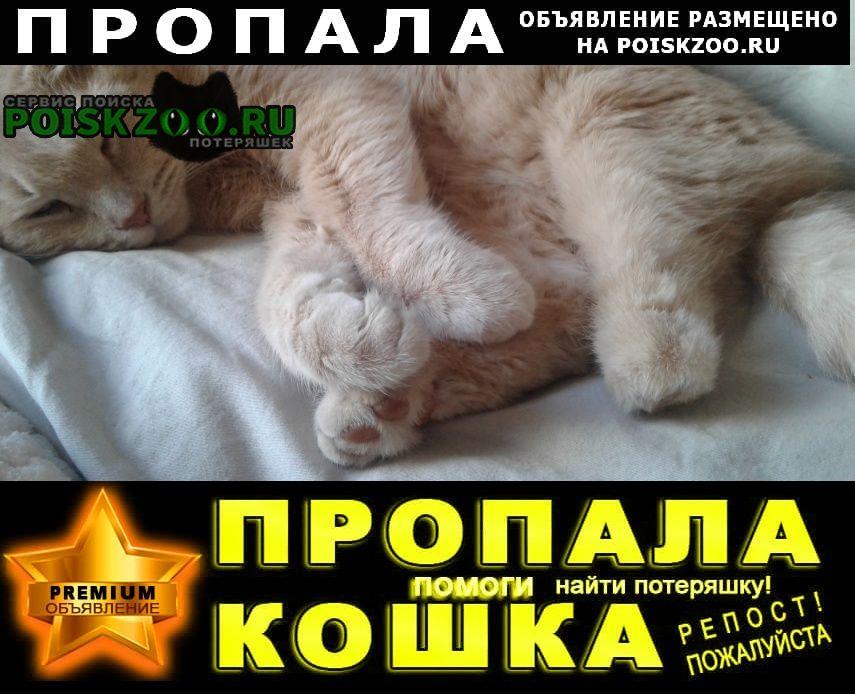 Пропал кот в поселке Икша