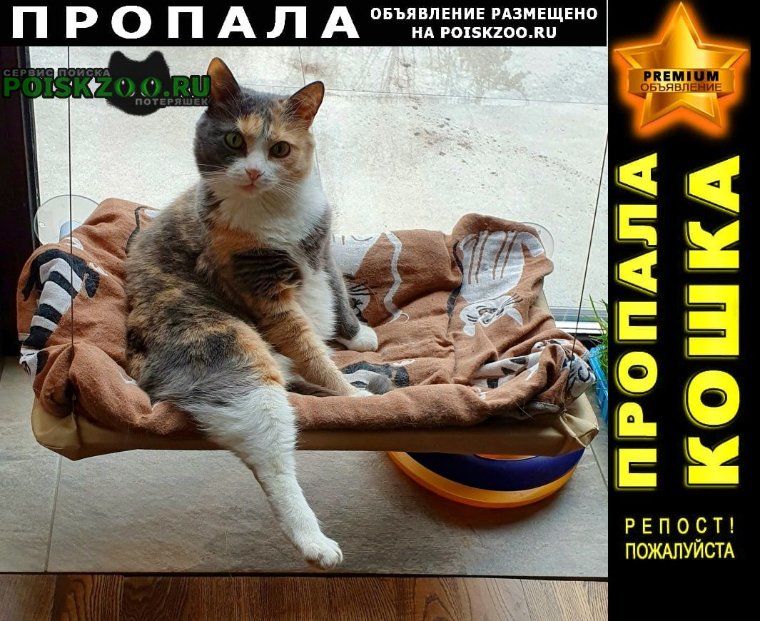 Пропала кошка медовая долина- поселок крекшино Кокошкино