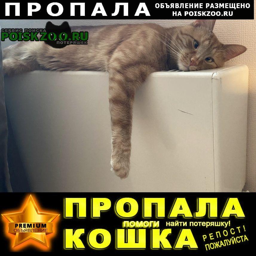 Пропал кот косоглазый, рыжий, беспородный, 3+ года Домодедово