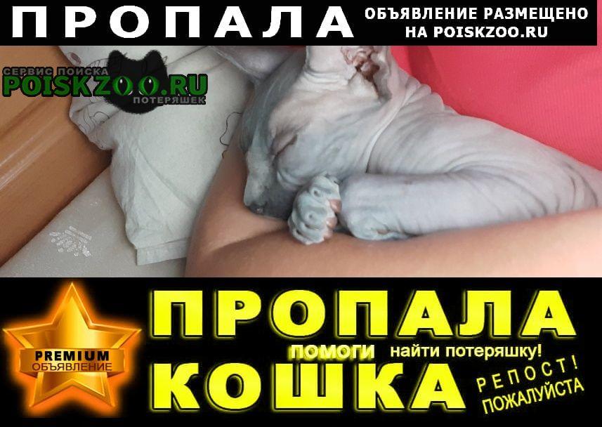 Пропала кошка помогите найти кошку Симферополь