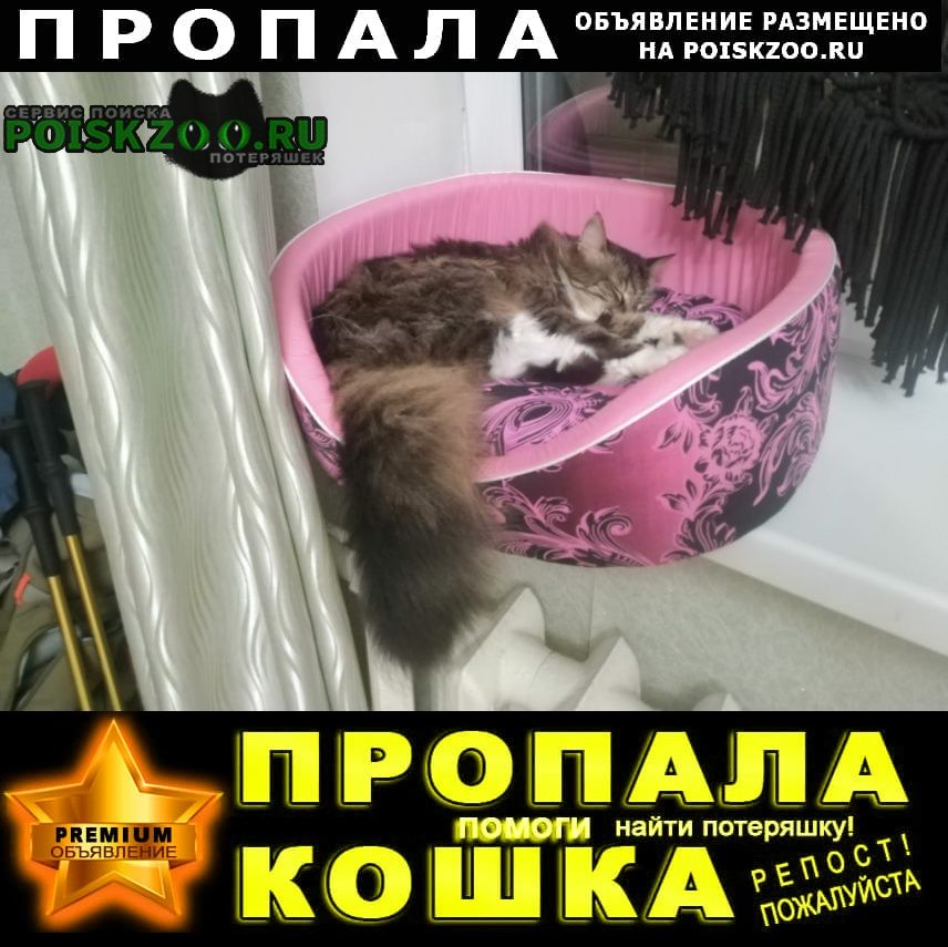 Пропала кошка в г. Истра