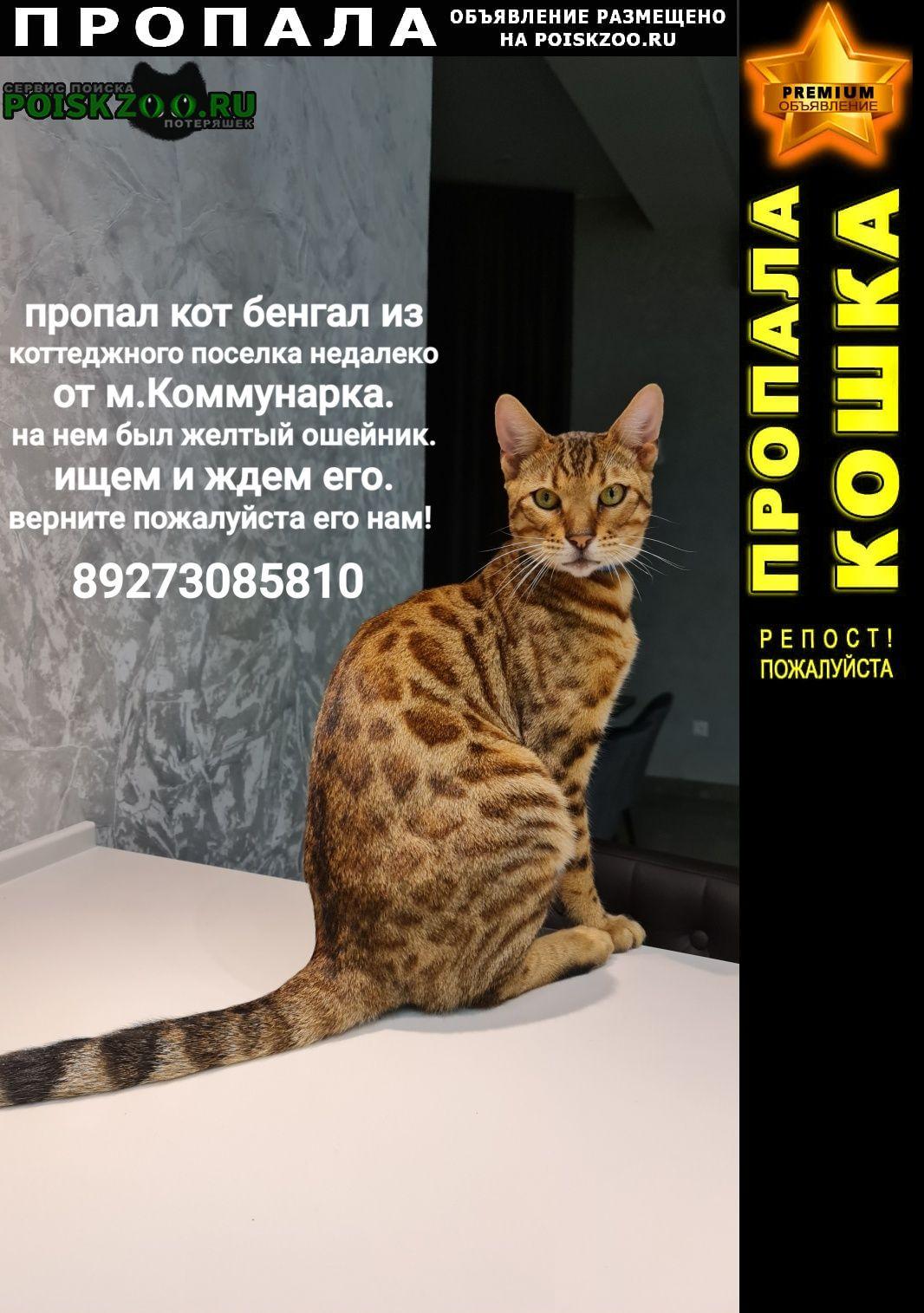 Пропал кот бенгал с жёлтым ошейником Москва