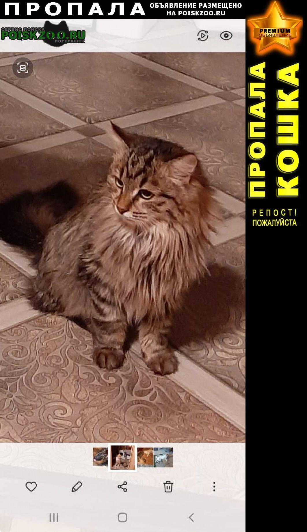 Пропала кошка дер красные орлы снт луч минэнерго Чехов