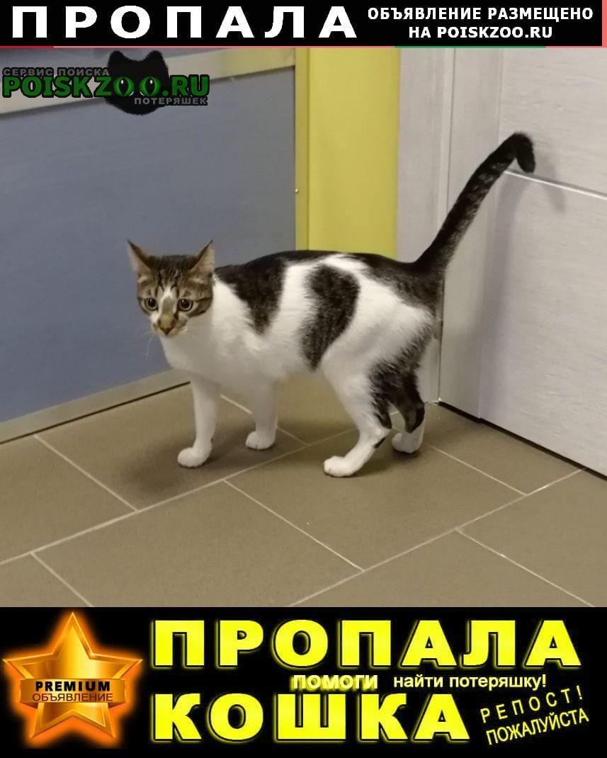 Заокский Пропал кот