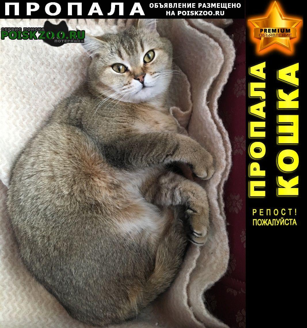 Зеленогорск (Ленинградская обл.) Пропала кошка