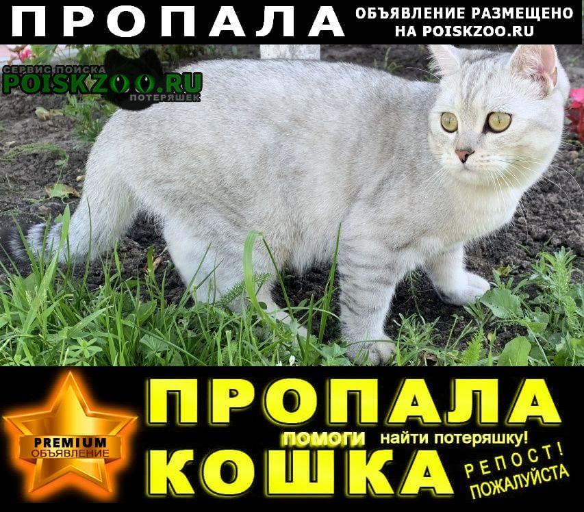 Бронницы Пропал кот деревня панино
