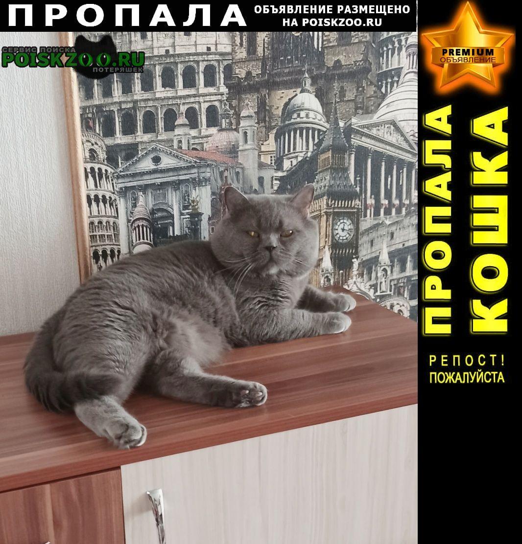 Пенза Пропал кот британец