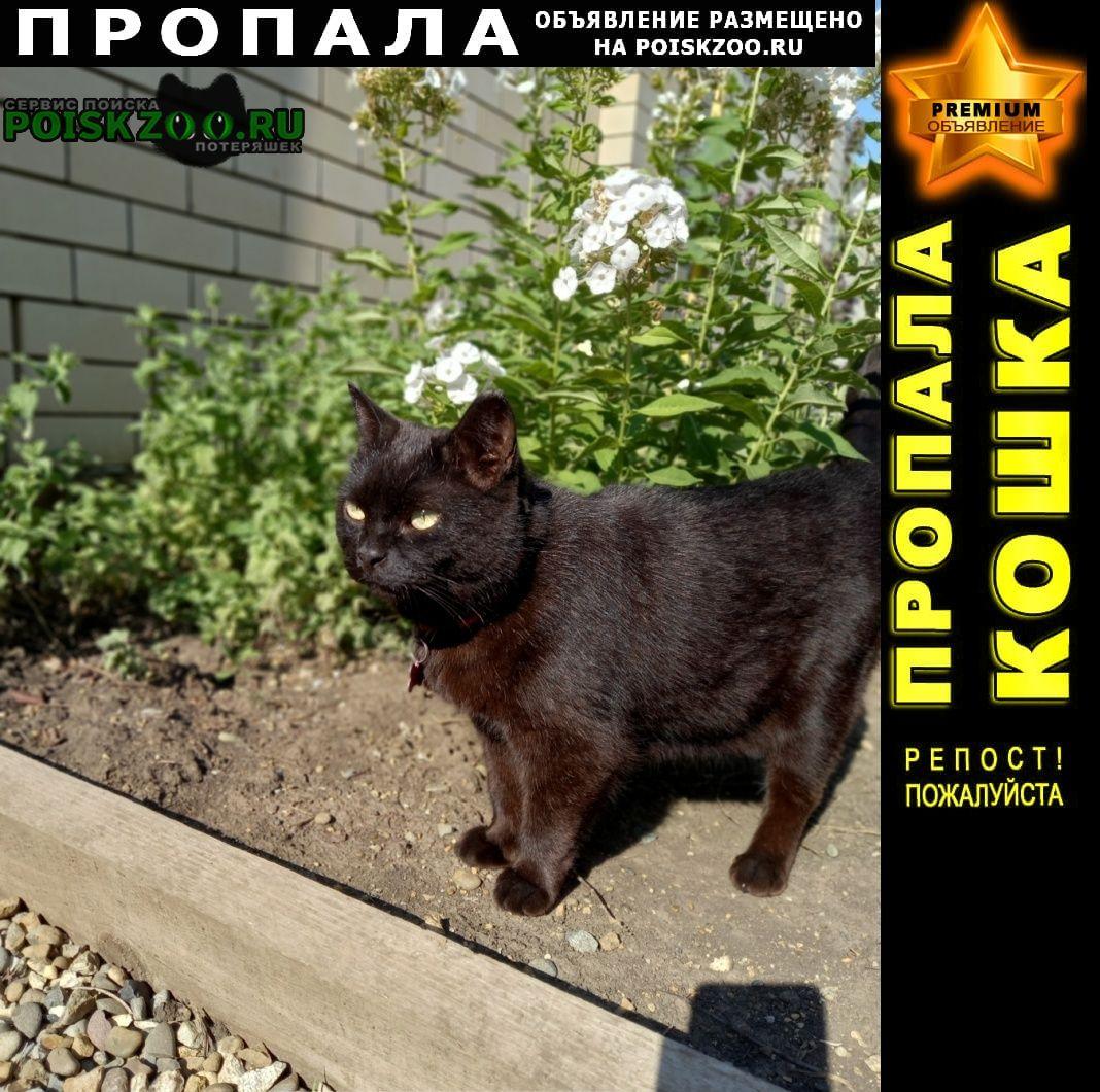 Пропал кот черный барсик Краснодар
