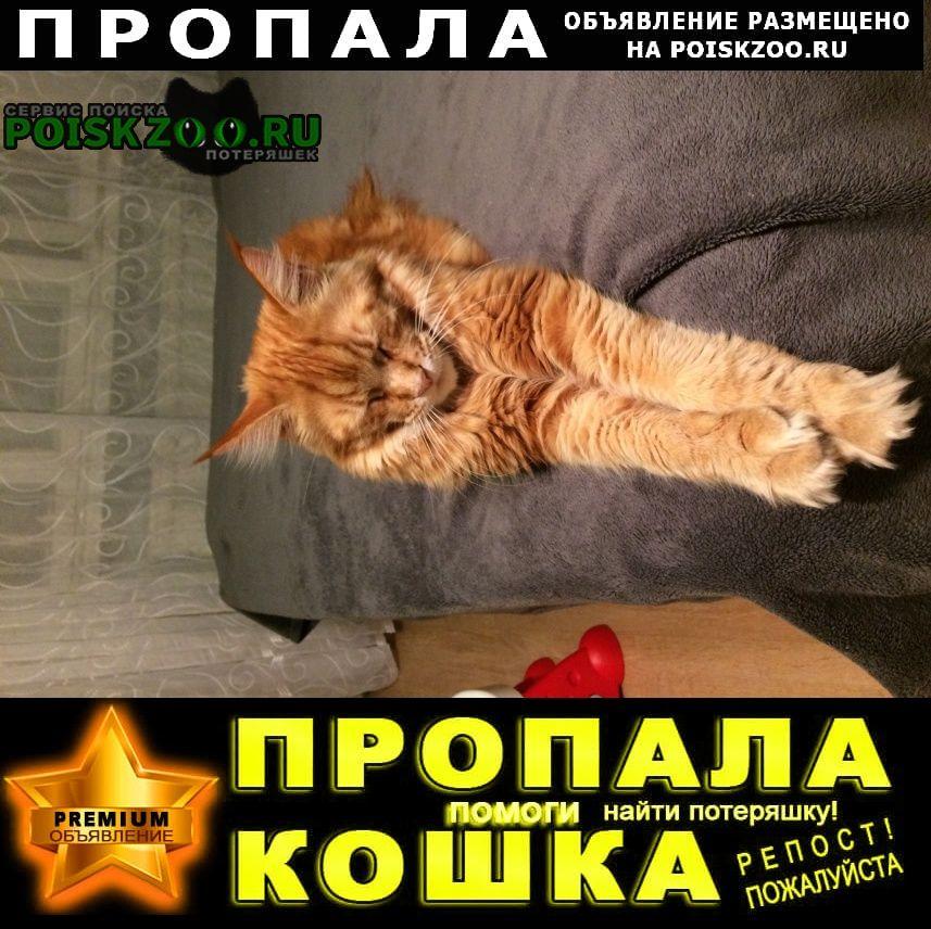 Фирово Пропал кот рыжий