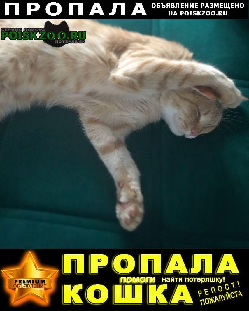 Тюмень Пропал кот рыжий