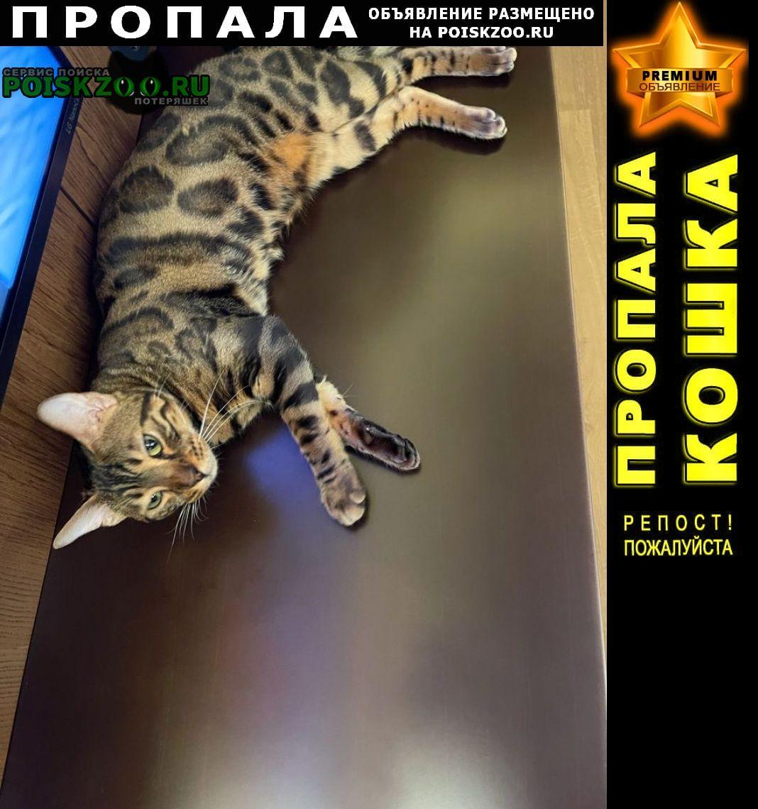 Пропал кот бенгалец, возрастом около1, 5 лет Звенигород