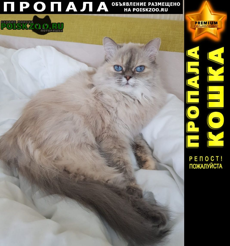 Пропала кошка Курск