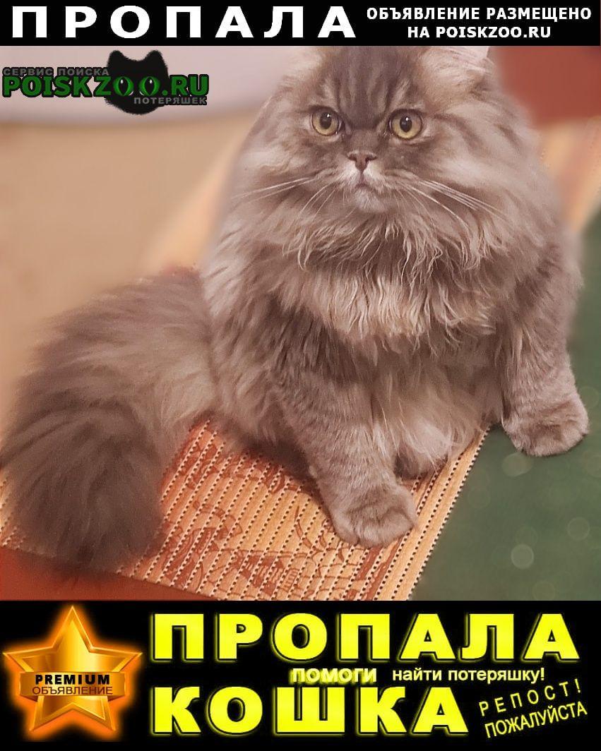 Ростов-на-Дону Пропал кот