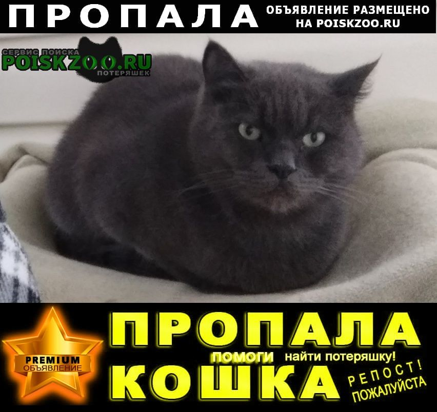 Анапа Пропал кот