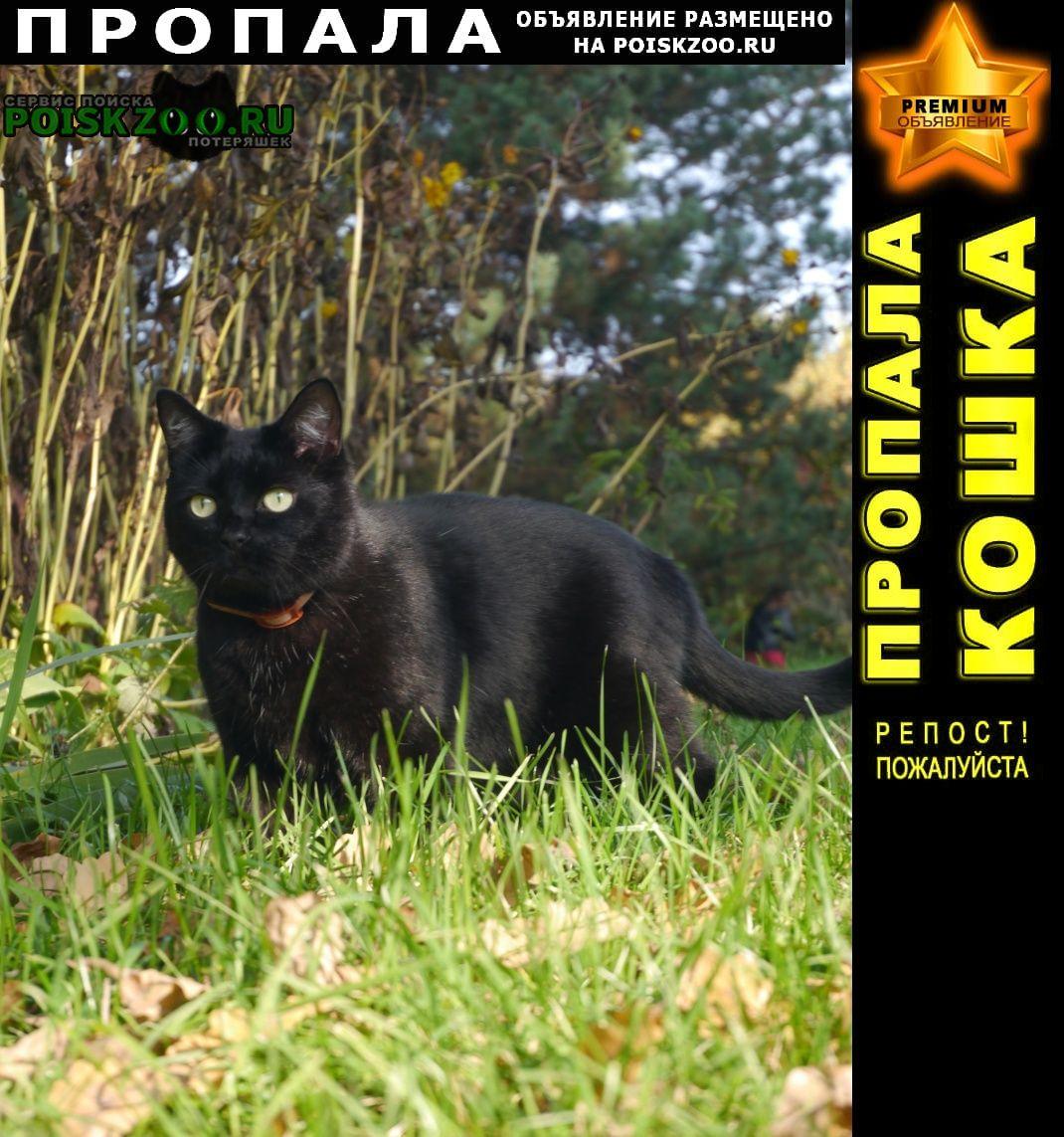 Пропал кот Красноармейск (Московская обл.)