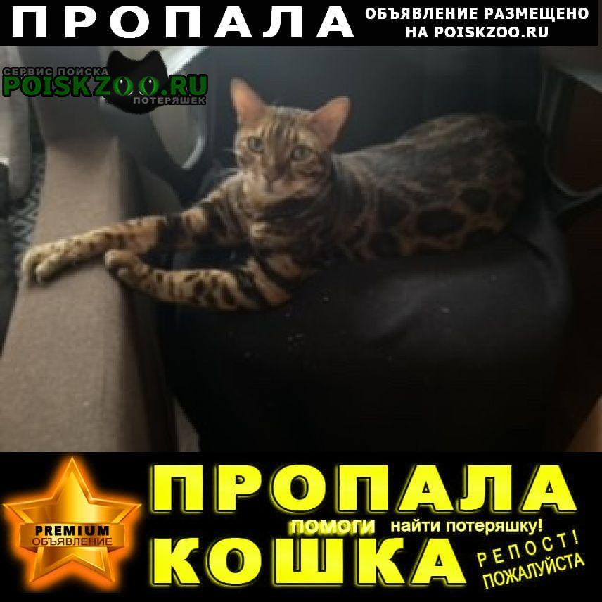 Пропал кот бенгальский Нарофоминск