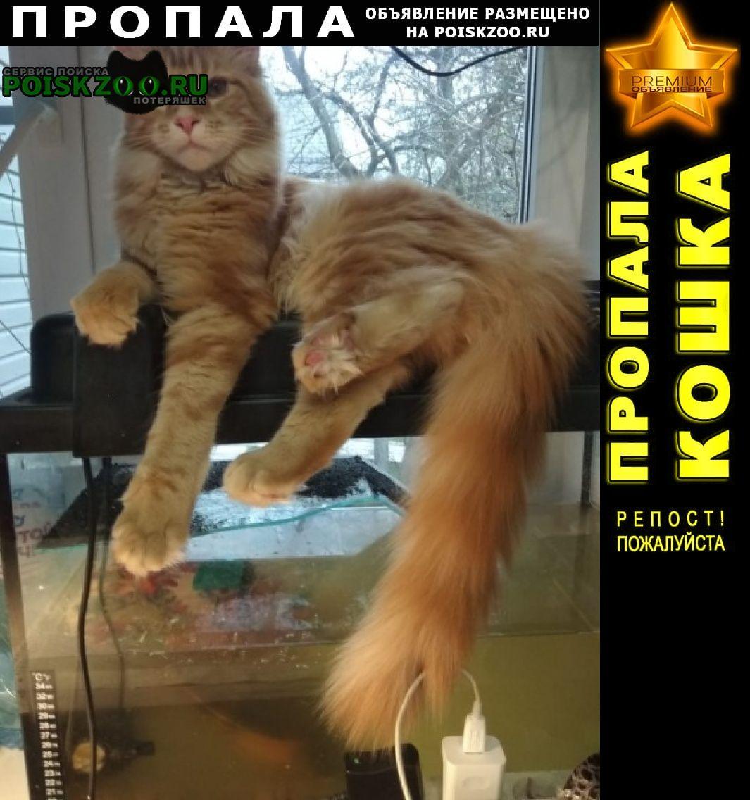 Тверь Пропала кошка