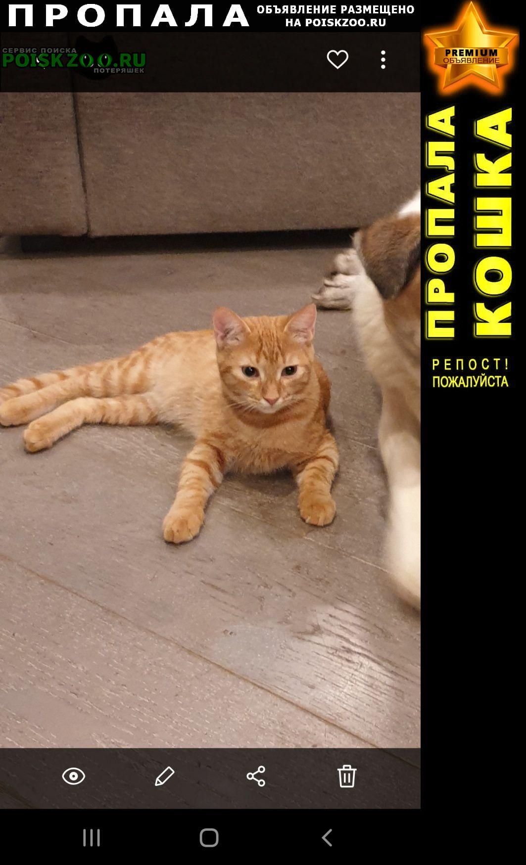Пропал кот рыжий Домодедово