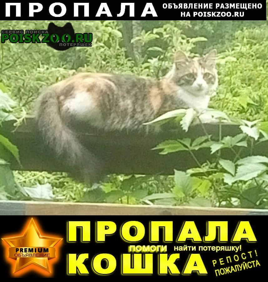 Пропала кошка любимица Солнечногорск