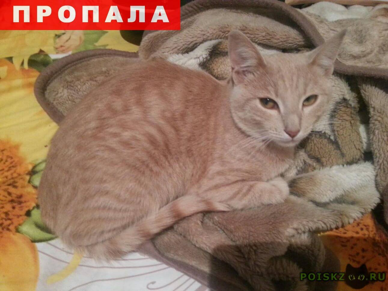 Пропал кот -крысолов г.Саратов