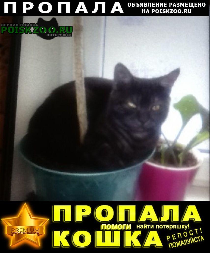 Ростов-на-Дону Пропала кошка. кот помогите найти пожалуйста
