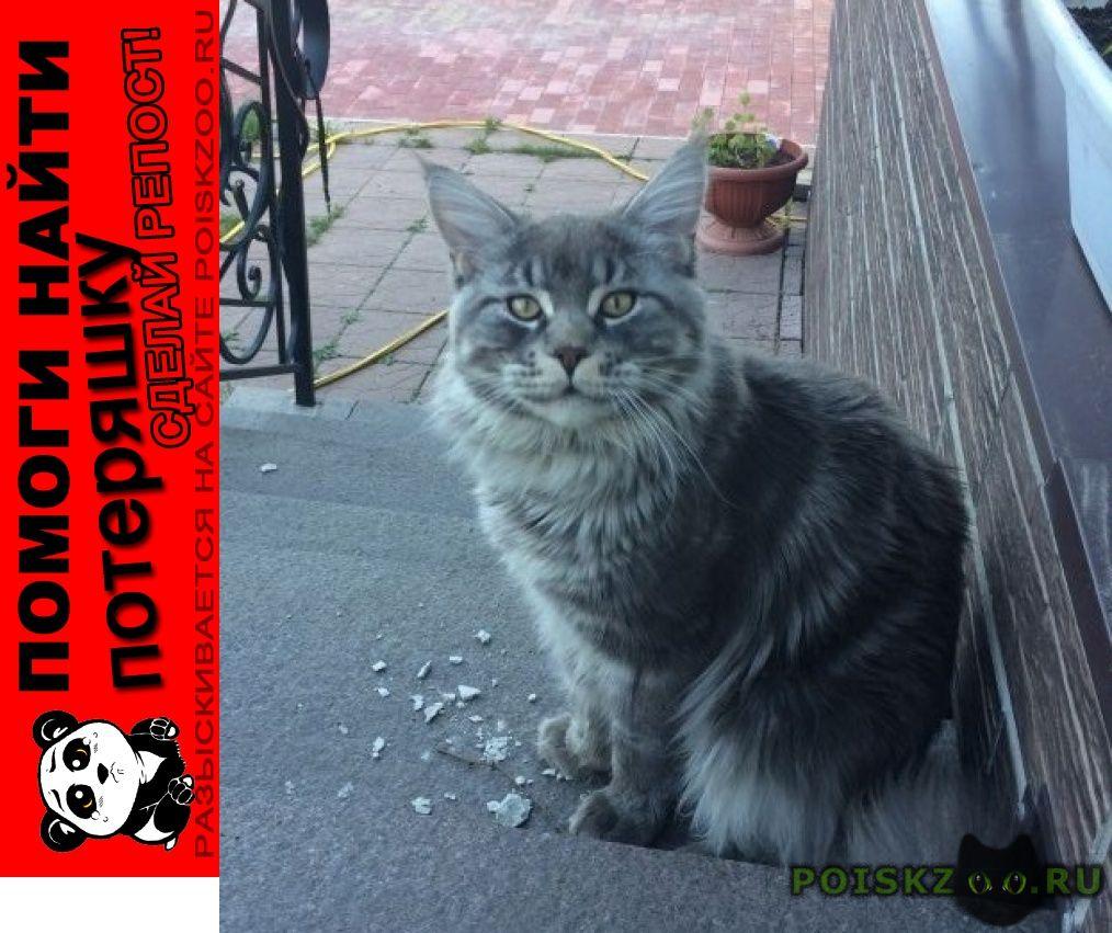 Пропал кот большой крупный г.Тверь