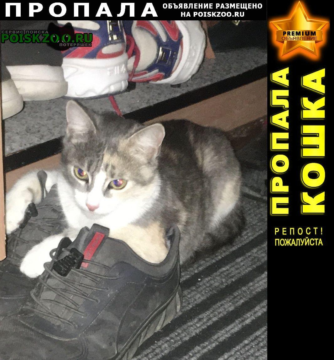 Пропала кошка. Крымск