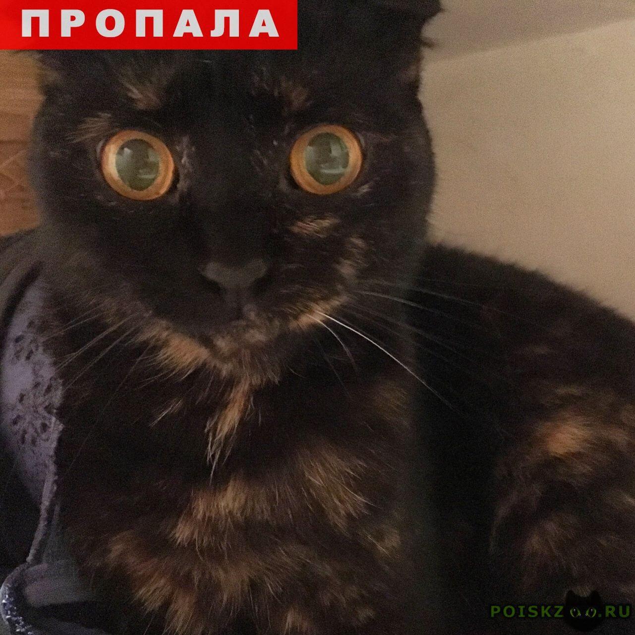 Пропала кошка вислоухая г.Краснодар