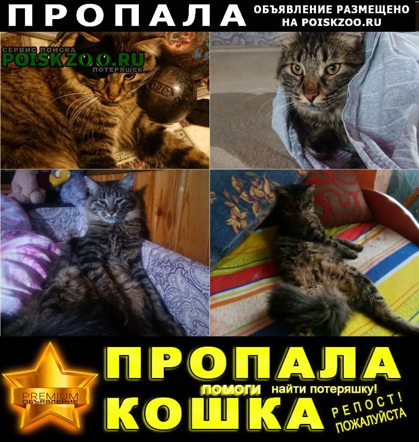 Пропала кошка  помогите найти члена семьи  Электросталь