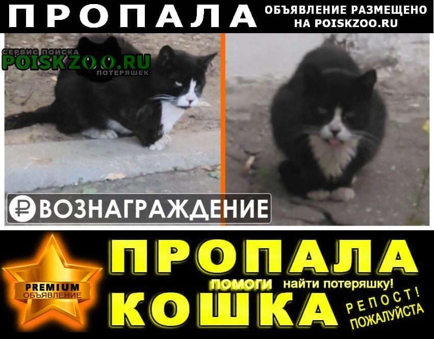 Пропал кот окрас черно-белый Москва