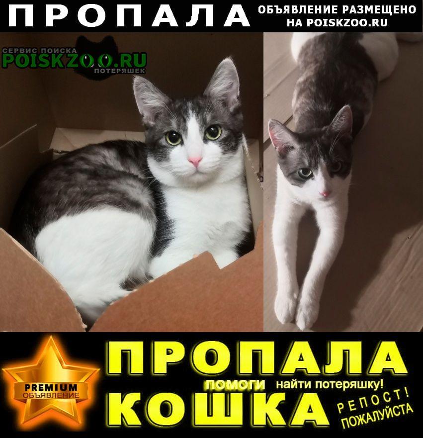 Пропал кот Обнинск