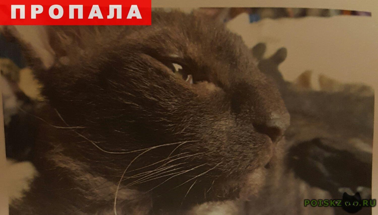 Пропал кот  г.Фирсановка