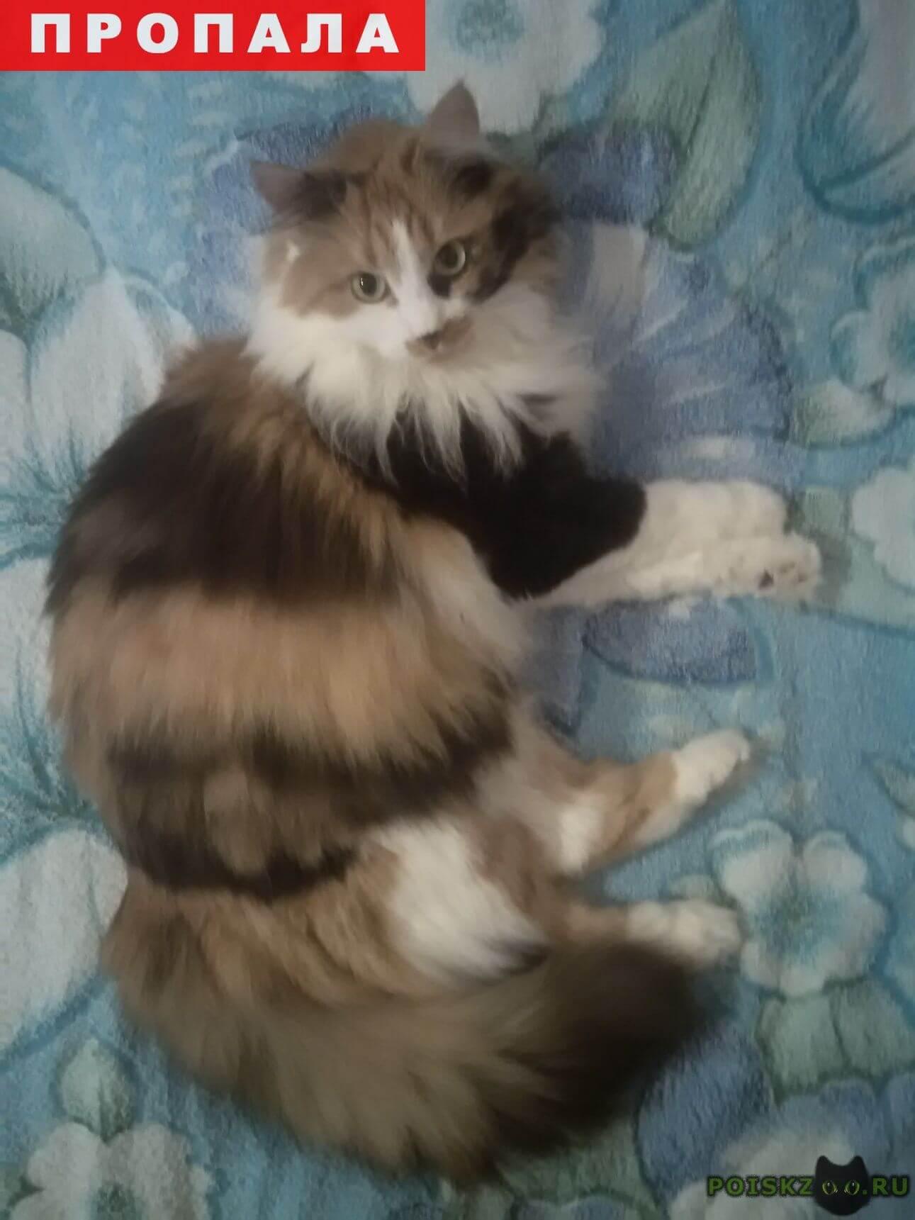 Пропала кошка г.Евпатория