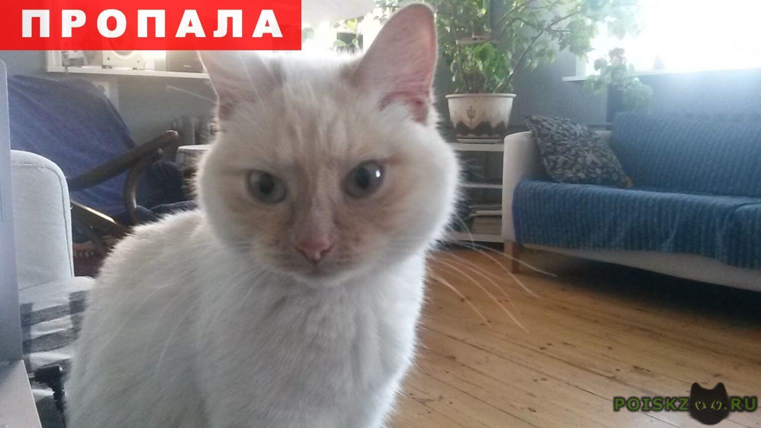 Пропала кошка помогите  г.Москва