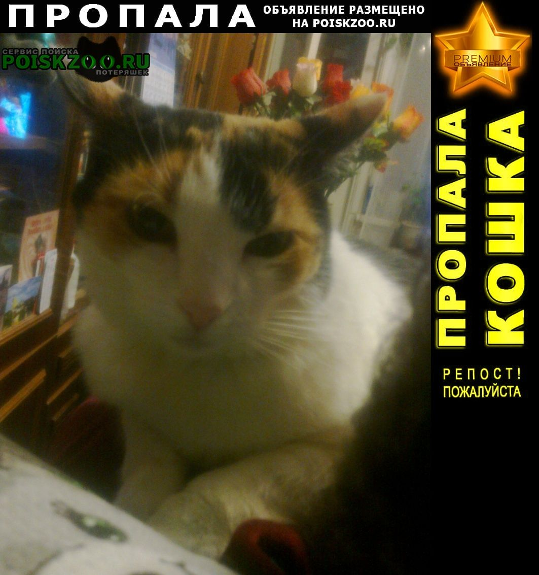 Пропала кошка имя - тишка Ярославль