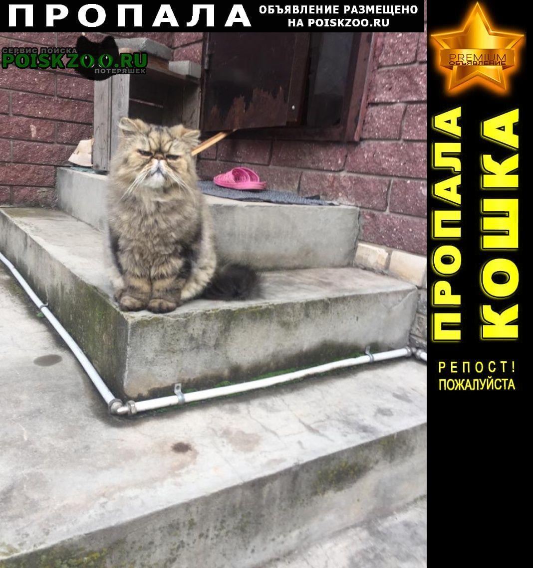 Большое Козино Пропала кошка кот по кличке кубик