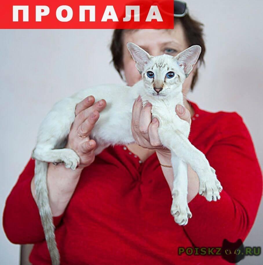 Пропала кошка в районе центрального рынка, 13 мая 2017 г.Брянск
